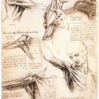 Da Vinci Anatomical Studies Of The Shoulder