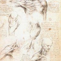 Da Vinci Anatomical Studies Of The Shoulder 1509 10