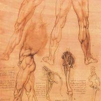 Da Vinci Studies Of Legs Of Man And The Leg Of A Horse