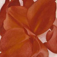 O Keeffe Red Cannas 2