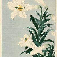 Ohara Koson White Lily 1930-s